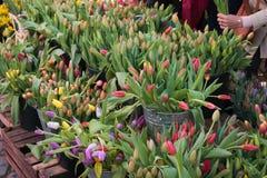 As tulipas coloridas na exposição nos fazendeiros introduzem no mercado em março Foto de Stock Royalty Free