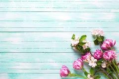 As tulipas da mola florescem e as flores da árvore de maçã na turquesa causam dor Fotografia de Stock Royalty Free