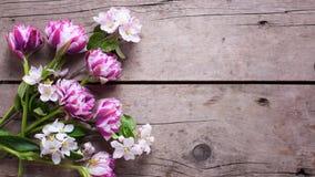 As tulipas e a árvore de maçã florescem no fundo de madeira envelhecido Fotografia de Stock Royalty Free