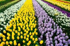 As tulipas, jardim de Keukenhof, Países Baixos Fotos de Stock