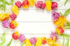 As tulipas moldam na madeira branca Fotos de Stock Royalty Free