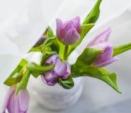 As tulipas roxas florescem ramalhete verde macro da decoração da natureza do dia de mães da mola da inscrição brilhante imagem de stock royalty free