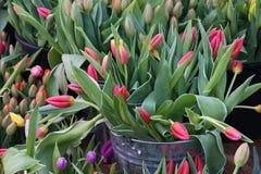 As tulipas vermelhas na exposição nos fazendeiros introduzem no mercado em março Imagem de Stock Royalty Free