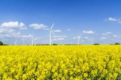 As turbinas eólicas em uma colza colocam com céu azul e nuvens imagem de stock