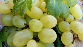 As uvas brancas com folhas fecham-se acima fotografia de stock royalty free