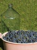 As uvas colhem e engarrafam Fotografia de Stock Royalty Free