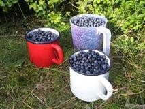 As uvas-do-monte no esmalte agridem no assoalho da floresta Imagem de Stock Royalty Free