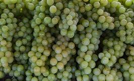As uvas esverdeiam, retalho de uvas verdes deliciosas fotografia de stock