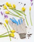 As vários flores e jardim da mola trabalham luvas no fundo de madeira branco, vista superior Imagens de Stock Royalty Free