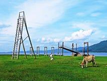 As vacas comem o grama-rio - contexto montanhoso fotografia de stock