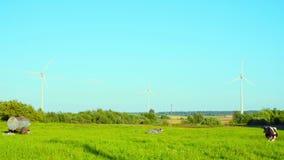 As vacas pastam perto dos geradores de vento video estoque