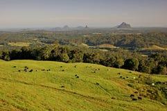 As vacas vêm para casa Fotografia de Stock