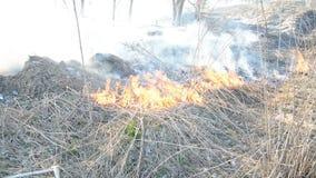 As van gebrand gras in de brand stock video