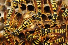 As vespas aninham-se na grama imagens de stock royalty free