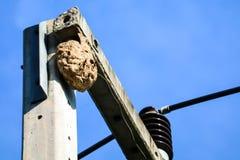As vespas aninham-se sobre o polo el?trico para evitar a interfer?ncia de outros animais imagem de stock royalty free