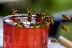 As vespas deleitam vespas no vidro da bebida doce fotos de stock royalty free