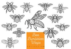 As vespas dos zangões da abelha do mel ajustaram wi da inserção da coleção do estilo do esboço Fotos de Stock Royalty Free