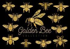 As vespas dos zangões da abelha do mel ajustaram wi da inserção da coleção do estilo do esboço Imagens de Stock Royalty Free