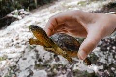 As vidas pequenas de uma tartaruga aproximam as ruínas maias na costa de Cozumel imagens de stock royalty free