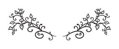 As videiras tiradas mão saem de ondas e rodam vetor no parágrafo do elemento do projeto ou no divisor extravagante do texto, proj ilustração royalty free