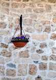 As violetas em um potenciômetro decorativo penduram com uma parede de pedra da casa fotografia de stock