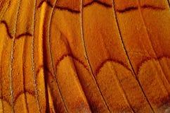 Asa da borboleta fotografia de stock