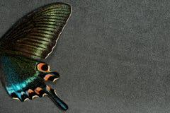 Asa da borboleta Fotografia de Stock Royalty Free