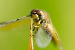 A asa da libélula, asa média, obtém alguns ar e luz solar sobre o Beau Fotos de Stock