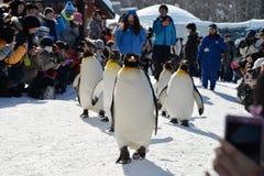 Asahiyama Zoo. Penguin Parade in Asahiyama Zoo Stock Photos
