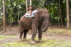 Asain-Elefant stockbild