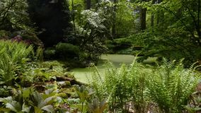 Asain garden with a gravel path wraping around a pond filled with green duckweed. Manicured asain garden with a gravel path wraping around a pond filled with stock video footage