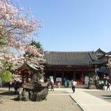 Asakusa, Japan - March 29, 2015 : A lot of people in sakura gard Royalty Free Stock Images
