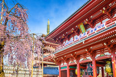 Asakusa Temple in Springtime Stock Photo