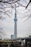 Asakusa, Tokyo/Giappone 15 gennaio 2019: Vista di Tokyo Skytree dal parco di Sumida immagine stock libera da diritti