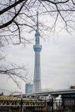 Asakusa, Tokyo/Giappone 15 gennaio 2019: Vista di Tokyo Skytree dal parco di Sumida fotografie stock