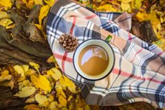Asalte con café y la manta calientes en tocón de madera en las hojas de otoño amarillas caidas en el bosque, fin de semana al air Imagen de archivo