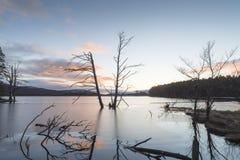 Asalte el árbol en el lago Mallachie en el parque nacional de Cairngorms Imágenes de archivo libres de regalías