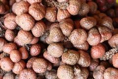 Asam Paya (Eleiodoxa conferta) Stock Image
