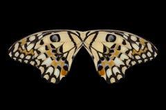 Asas da borboleta Imagem de Stock