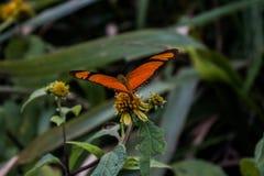 Asas da borboleta foto de stock