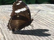 Asas da sombra do coração da borboleta de Brown Imagens de Stock Royalty Free