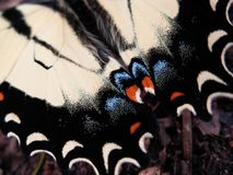 Asas de Buttefly Fotografia de Stock