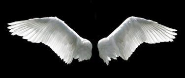 Asas do anjo imagem de stock