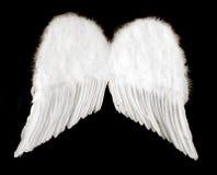 Asas do anjo isoladas no preto Fotos de Stock Royalty Free