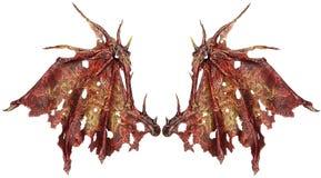 Asas do dragão imagens de stock royalty free