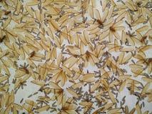 Asas do inseto Foto de Stock