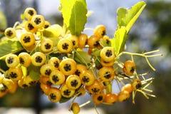 Asberrys Stock Photos