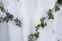 Asbestmuur leimuur van grijs en wit met groene bladeren Bruine vlekken op lei royalty-vrije stock foto's