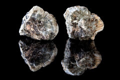 Asbestos. Rough piece of anthophyllite asbestos, a mineral causing mesothelioma cancer Stock Photo
