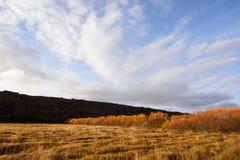 Asbyrgi-Bäume Stockfotografie